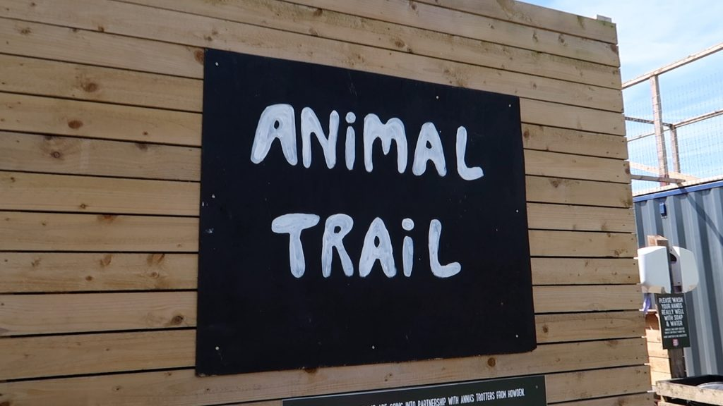 Things to do in Lincolnshire | The Pink Pig Farm, Holme near Scunthorpe animal trail