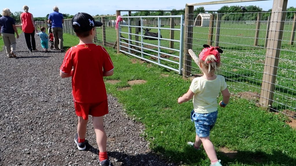 Things to do in Lincolnshire | The Pink Pig Farm, Holme near Scunthorpe walking through farm