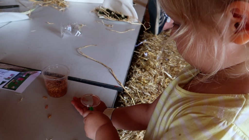 Things to do in Lincolnshire | The Pink Pig Farm, Holme near Scunthorpe looking at bugs