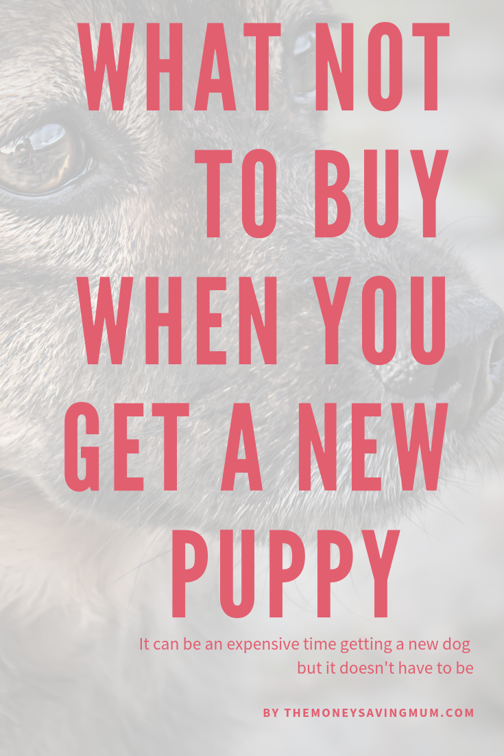 What not to buy when getting a new puppy