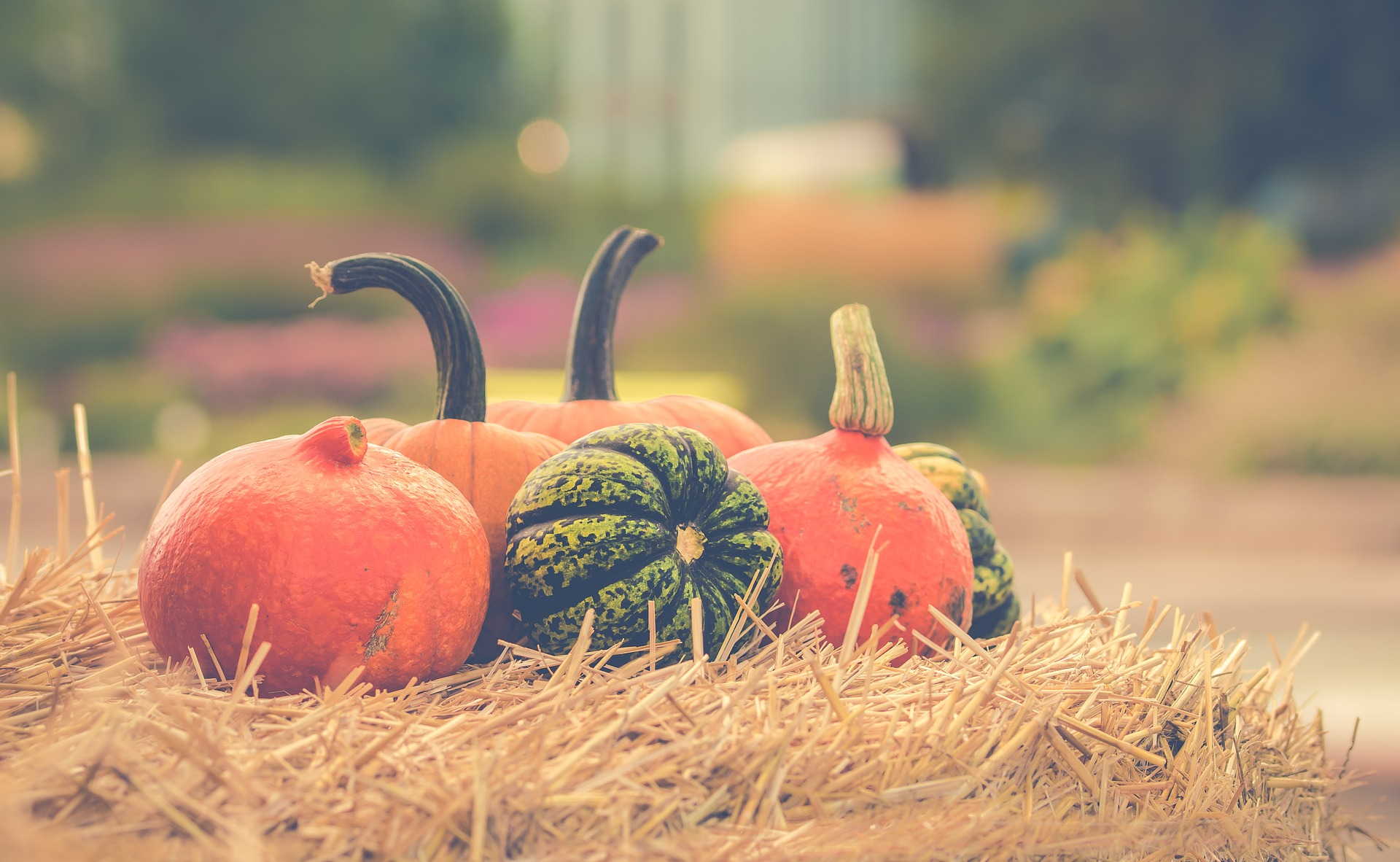 free and low cost things to do this  autumn