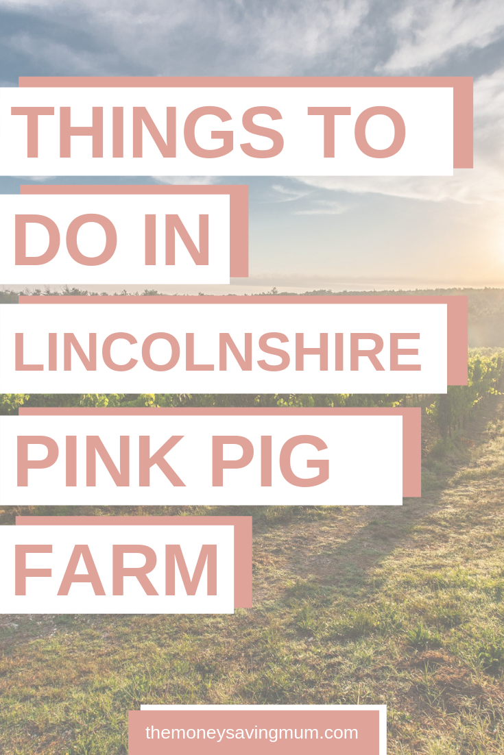 Things to do in Lincolnshire | The Pink Pig Farm, Holme near Scunthorpe
